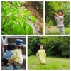 6月①小雨の森をおさんぽ