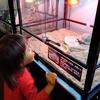 我が家のペットのインドホシガメ