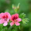 花盛りのベランダ2021 (1)