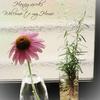 花への愛を表す方法・・・・我が家のプチガーデンからのエキナセアとローズマリーへ♪