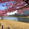 旧中川:荒川ロックゲートから木下川水門、河津桜を添えて