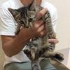 仔猫の里親募集のお知らせ→募集は終了しました(8.10追記)
