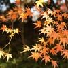 【お誘い】10/31博多:ジェムリンガメンテナンス会