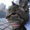 11月後半の #ねこ #cat #猫 その4