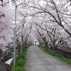 紀の川北岸自転車生活 近所の神社の桜がトンネルのようできれいでした