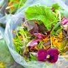花が食用になるかどうか迷ったら,食べないでください.シンプルな経験則ですが,効果的です./トンプソン&モーガン   Unusual edible flowers(一般的ではないエディブルフラワー)1.Forget-me-not  忘れな草,2.Sunflower ヒマワリ,3.Hollyhock タチアオイ,4.Lilac ライラック,5.Camelliaツバキ ------ 食べられる花 Edible Flowers3