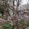2016.04.28 札幌南区・真駒内