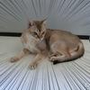 16歳の老猫「シグレ」余命1週間以内 残された時間を大切に