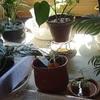本日、またまた挿し木の鉢植えを・・んなことより、カープが!