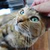 9月前半の #ねこ #cat #猫 どらやきちゃん