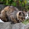 猫の忌避剤の効果を3倍に上げる方法!実践で学んだ2つのポイント!