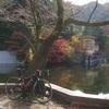 鎌北湖に紅葉を見に行くサイクリング&獅子ヶ谷滝まで軽い登り 毛呂山シリーズ第二弾