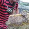 オーストラリアにいる巨大蜘蛛、ハンツマンが吉良吉影である可能性。