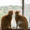 【健康&素敵】猫背・姿勢の改善 内臓の働きを良くするために!