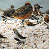 「渡り鳥が休める環境を」 野鳥の会が荒尾市に申し入れ