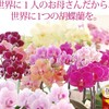 【母の日ギフト4選】2017年人気の胡蝶蘭やカーネーションを早割りで送ろう♪