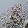 冬物コートは長く愛用したほうが環境にもやさしい。その手入れ法