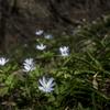 菫と菊咲一華の登山道を歩く 大峰山と吾妻耶山