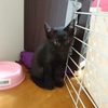 期待のNEW★FACE ~黒猫くぅちゃんデビュー①~