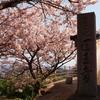 2017年4月14日の医王寺の桜