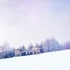 二十四節気 12月7日より大雪。山岳ばかりでなく平野にも雪が降り積もることからいいます。