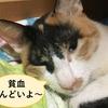 【非再生性の貧血】【考察】猫の非再生性貧血を考察してみた