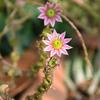 不気味な花