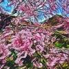 【平成最後】桜をアーティスティックに加工してみたものの。。。2019/05/01