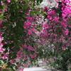 【沖縄・宮古島】沖縄宮古島旅行記⑫ ブーゲンビリアが咲き乱れるユートピアファーム【観光】