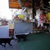 南の島の市場猫2017盛夏2。