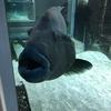 世にも珍しい水族館に行ってきました