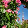 東京タワーを薔薇で囲った2021年5月の朝