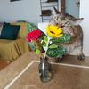 WITHコロナでWITHフラワーの生活|ブルーミーライフの定期便500円の花束に癒されています