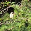 早朝川辺で見かけた幼鳥達🎶