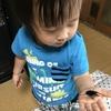 息子ちゃん昆虫に興味津々