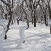◆'21/01/23   鳥海山・滝ノ小屋まで⑦