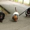 ニココ姉妹とランチして公園歩いた♪