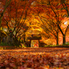 北関東の紅葉スポット【金蔵院】でもみじのトンネルを撮影(佐野市)