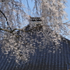 妙立寺の望楼と「しだれ桜」