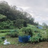 """畑からこんにちは! 0911  """" ただいまぁ〜😃💕     """"    毎日が楽しい家庭菜園!"""
