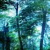 【無料/フリーBGM素材】永劫の時、森の成長、生命『Forest Growth』イージーリスニング