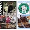 5月4日(火・祝)マイバッグ持ってお買い物を『千葉のいいもの販売会』 開催 千葉みなと 旅客船桟橋 ケーズハーバー