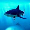 紅玉海でサメと握手!!