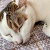 【臆病な猫】日々の生活と私の体験談⑭!!