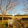桜と飛行機のコラボが楽しめる「三里塚さくらの丘」へ