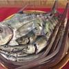 本日の漁港直送の魚たちo(^▽^)o