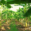Vientiane Times 「80%」、ラオス農産物の輸出先トップは中国