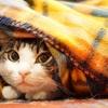 毛布は重いに限る