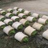 【まとめ】6月中旬(播種後28日) 苗の運搬(運び方)と後片付けの方法、やり方