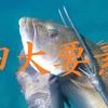 魚突きの4大要素